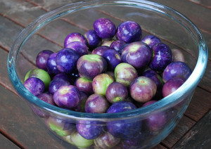 purple-tomatillo