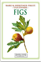 figs-medium-th