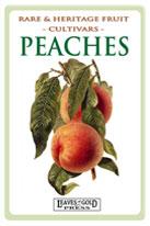 peaches-th-medium