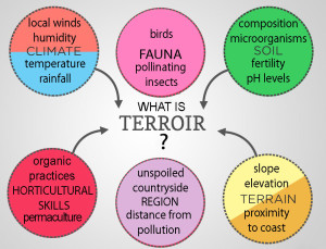 terroir-definition